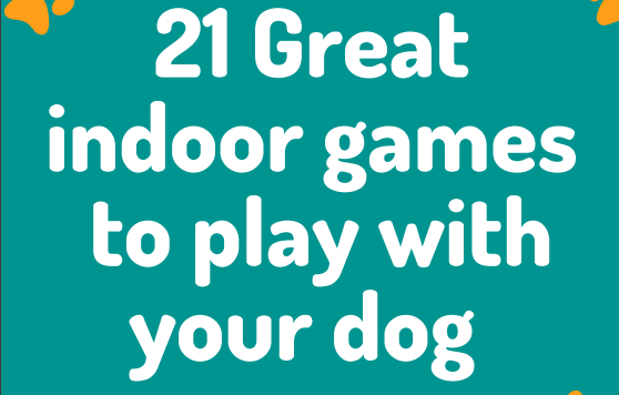 FREE e-book containing loads of fun indoor games to play with your dog.