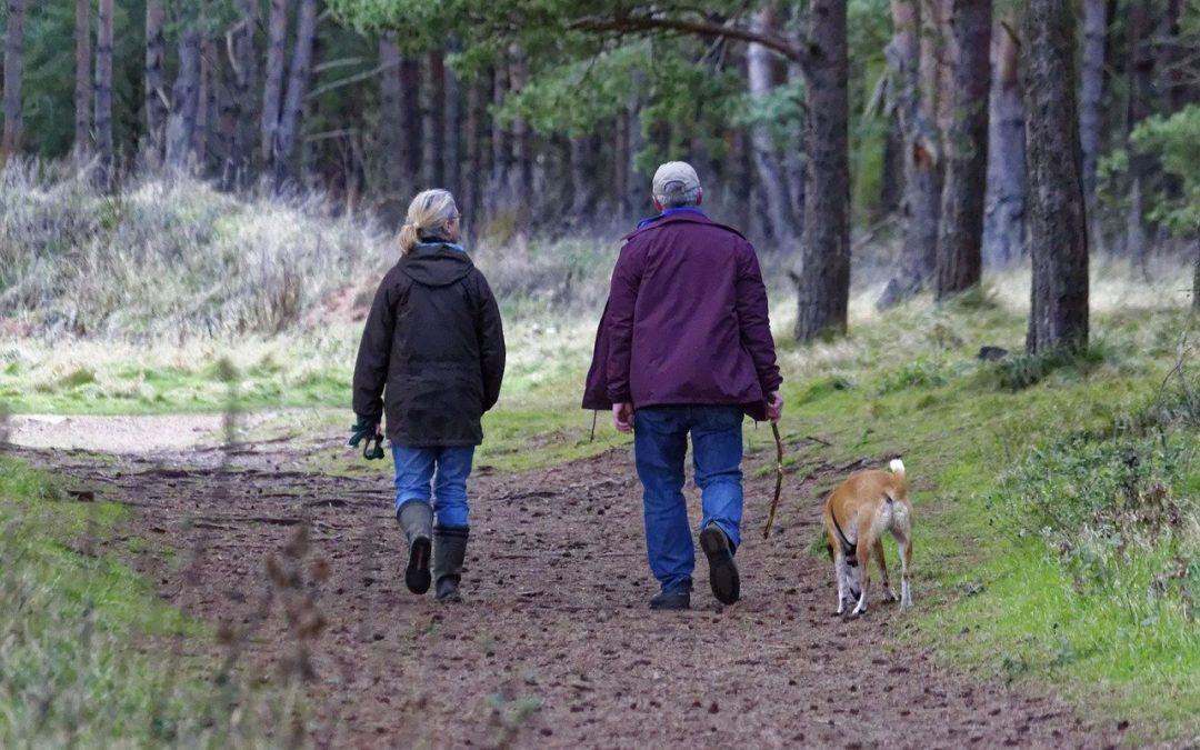 Baxter Park Dundee- Attempted Dog Theft