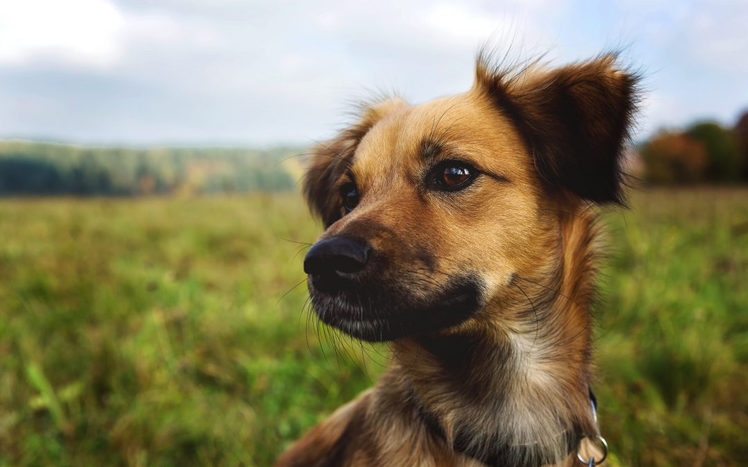 SPIKE IN DOG ATTACKS PREDICTED