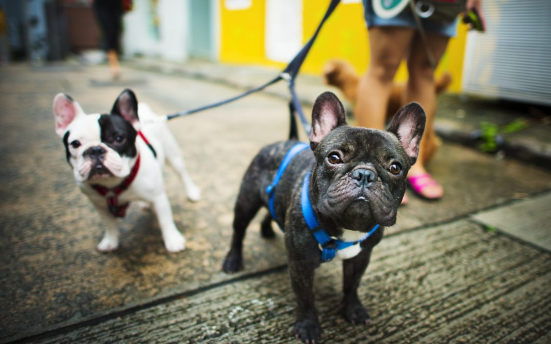 Pet Theft Taskforce Launched